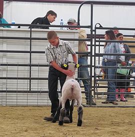 Brasfield Club Lambs | Winners